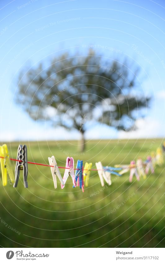 clothesline Wedding Family & Relations Friendship Partner Garden Arrangement Clothesline Clothes peg Firm Hold Clarity System Orderliness Colour photo