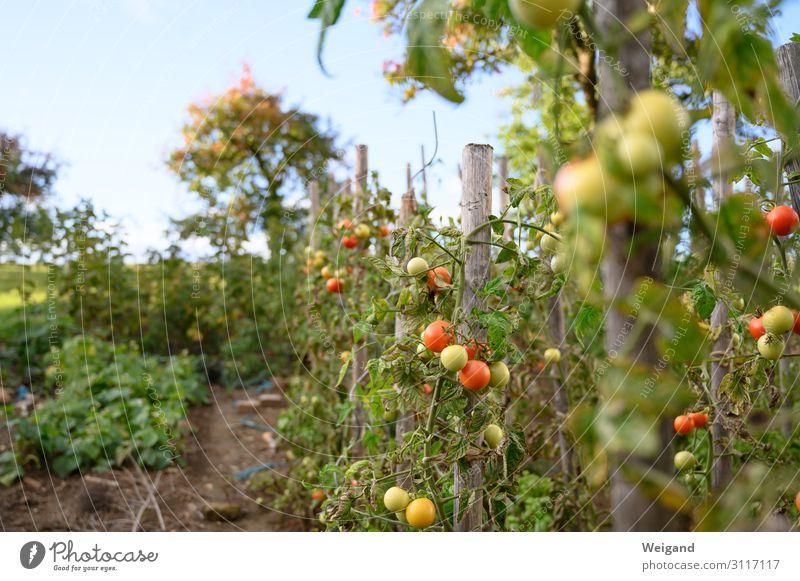 Nature Summer Red Food Autumn Environment Garden Nutrition Success Delicious Vegetable Harvest Mature Tomato Lettuce Salad