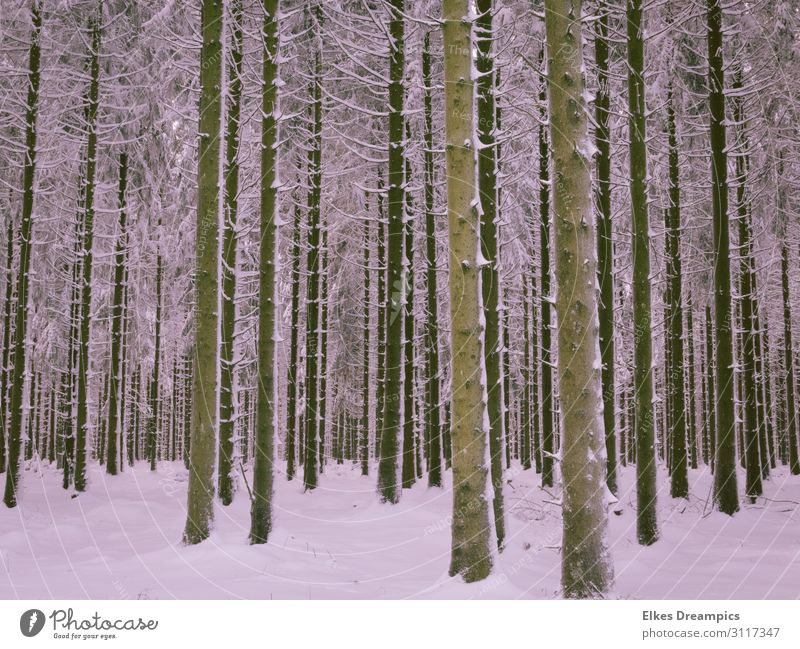 winter forest Environment Nature Landscape Elements Earth Winter Snow Tree Forest Relaxation Freeze Cold Natural Eifel Colour photo Subdued colour Exterior shot