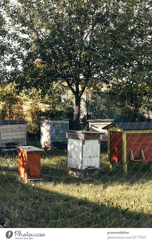 Apiary with couple hives in a orchard Summer Nature Animal Bee Authentic Natural honey apiculture Bee-keeping Honey bee agriculture bee yard bee-garden colony