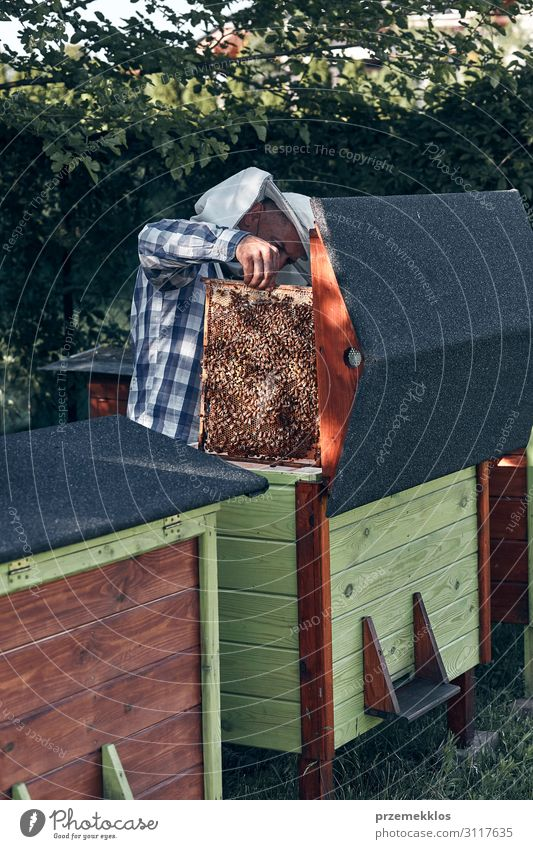 Beekeeper working in apiary Lifestyle Summer Human being Man Adults 1 45 - 60 years Nature Animal Draw Authentic Natural honey apiculture Bee-keeping Bee-keeper