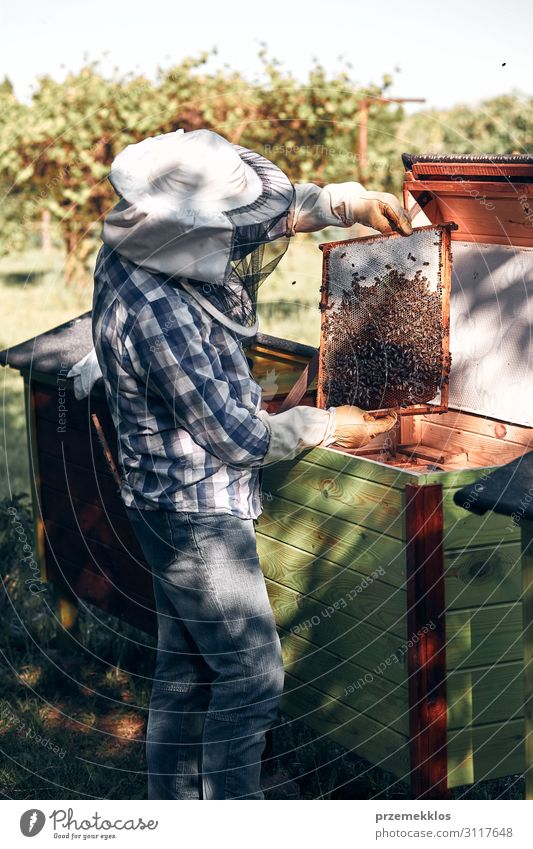 Beekeeper working in apiary Lifestyle Summer Human being Man Adults 1 45 - 60 years Environment Nature Animal Draw Authentic Natural Passion honey apiculture