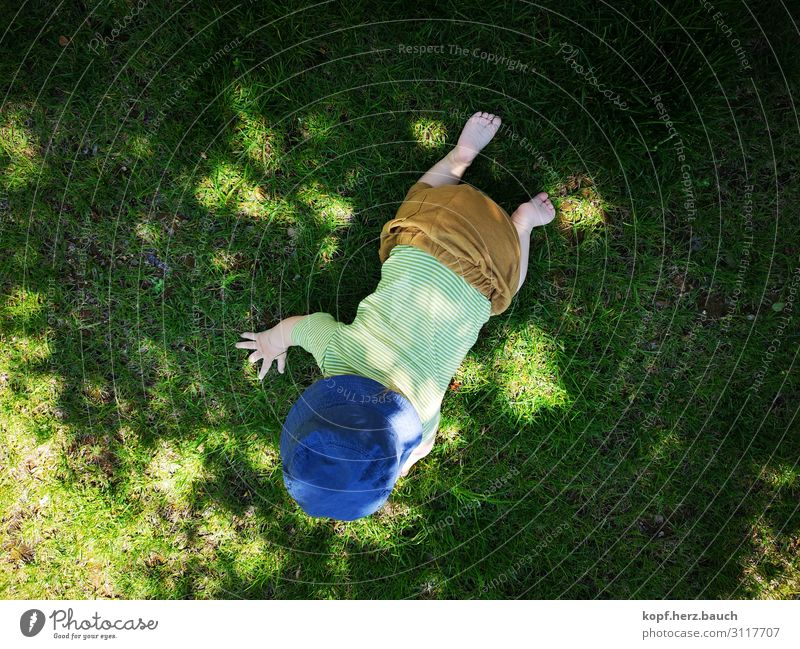 up and away Baby Toddler 1 Human being 0 - 12 months Meadow Cap Cute Joie de vivre (Vitality) Willpower Beginning Crawl Bird's-eye view learn to walk Small