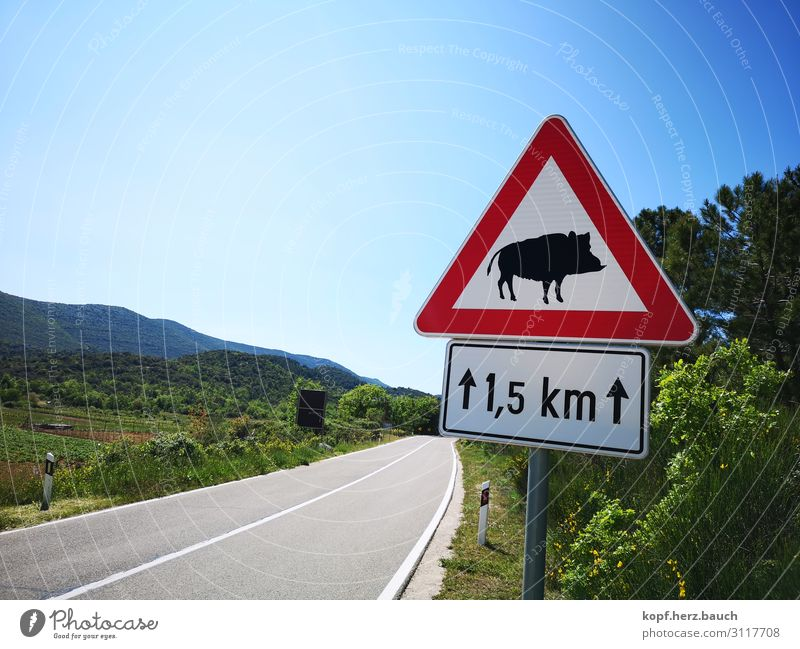 Hilde, the savage Koratia Transport Street Road sign Wild animal Wild boar 1 Animal Blue Green Red Movement Threat Idyll Tourism Logistics Lanes & trails