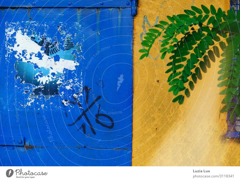 Blue, green and gold Plant Foliage plant Park Wall (barrier) Wall (building) Looking Yellow Gold Green Graffiti Abrupt Autumn Beautiful Multicoloured