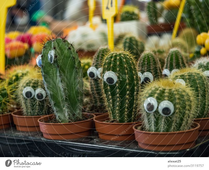 Funny cactus with eyes in a market Shopping Design Beautiful Garden Decoration Nature Landscape Plant Cactus Growth Bright Natural Yellow Green Colour