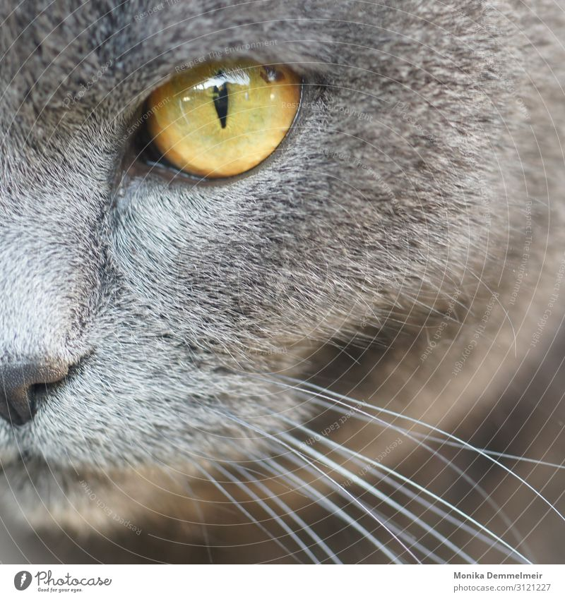 Look me in the eye Garden Environment Nature Animal Pet Cat Animal face Pelt Paw Animal tracks Petting zoo 1 Observe Hunting Cool (slang) Cuddly Astute Cute