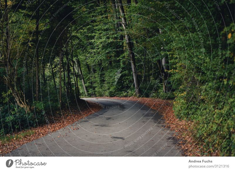 Street in autumn Environment Nature Landscape Clouds Autumn Tree Leaf Forest Lanes & trails Hiking Gray Green Colour photo Subdued colour Exterior shot Deserted