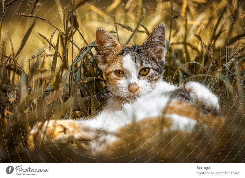 Cat Animal Baby animal Yellow Playing Orange Gold Wild animal Observe Pet Pelt Animal face Paw Feeding Claw Kitten