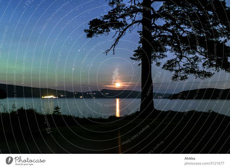 Northern lights and moonlight Nature Night sky Stars Horizon Tree Lakeside Aurora Borealis Moonlight Norway Glittering Illuminate Exotic Fantastic Gigantic