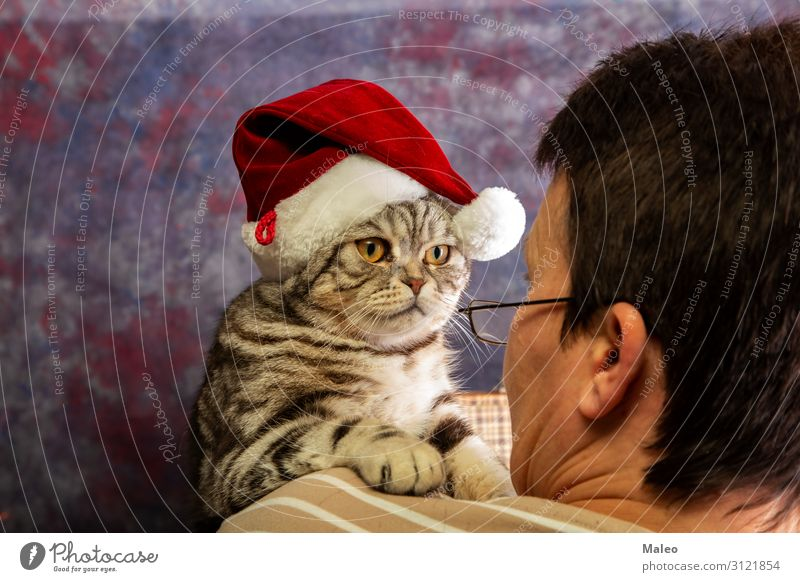 eyeball to eyeball Christmas & Advent Seasons Feasts & Celebrations Winter Public Holiday Cap Cat Domestic cat Girl Woman New Year's Eve Hat Eyes Looking