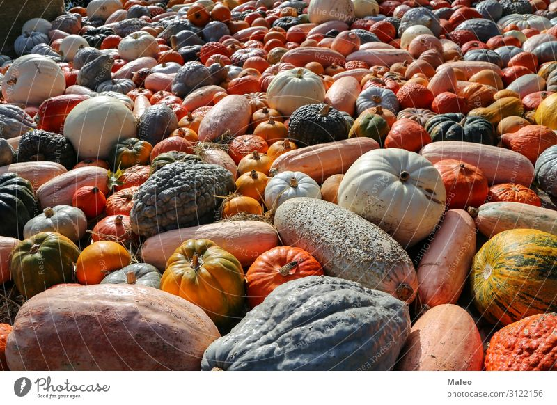 Fresh organic pumpkins on an agricultural market of the autumn Autumn Bazaar Organic produce Organic farming Multicoloured Cooking Farm Farmer Food Multiple