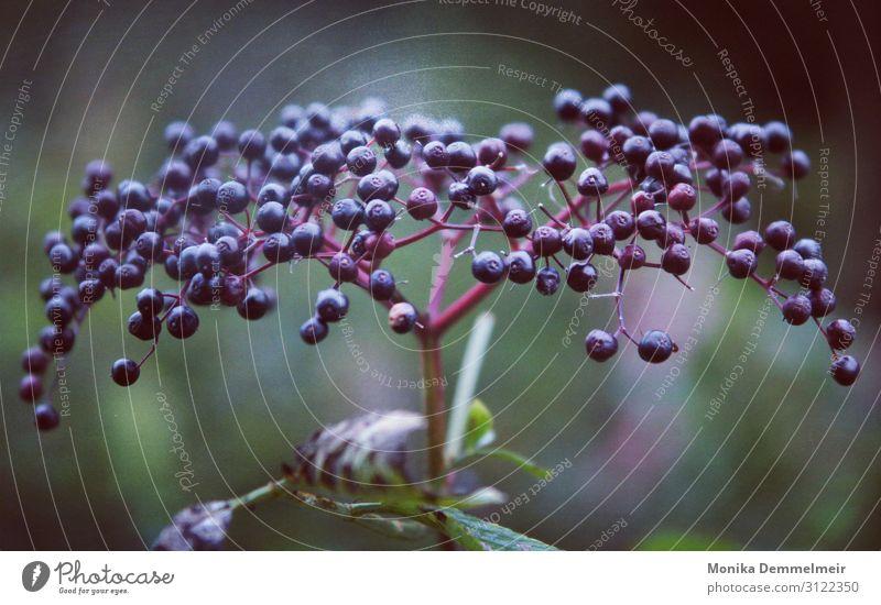 Nature Plant Calm Forest Autumn Joie de vivre (Vitality)