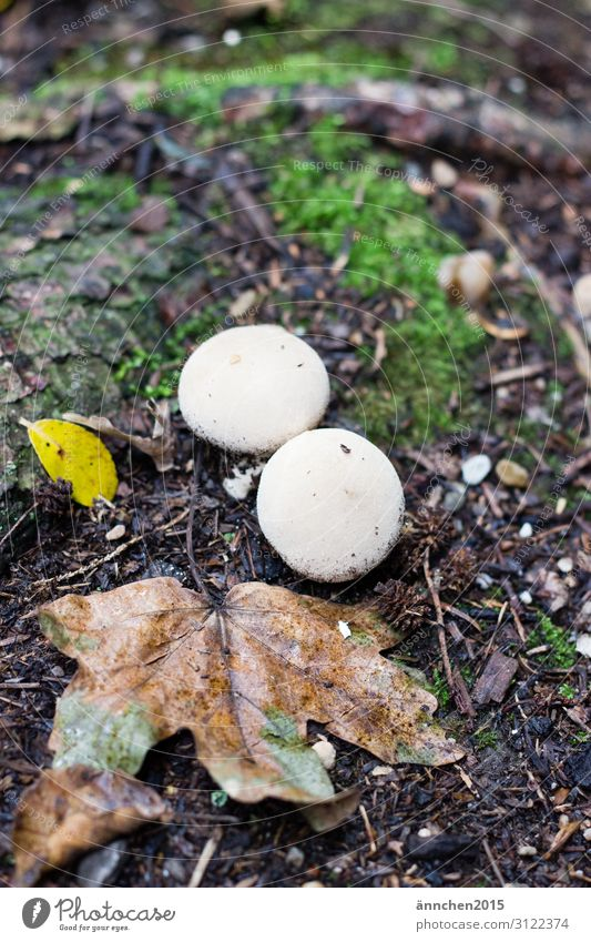 Autumn in the forest Leaf Nature Mushroom Moss Forest Green White Brown Rain To go for a walk find amass