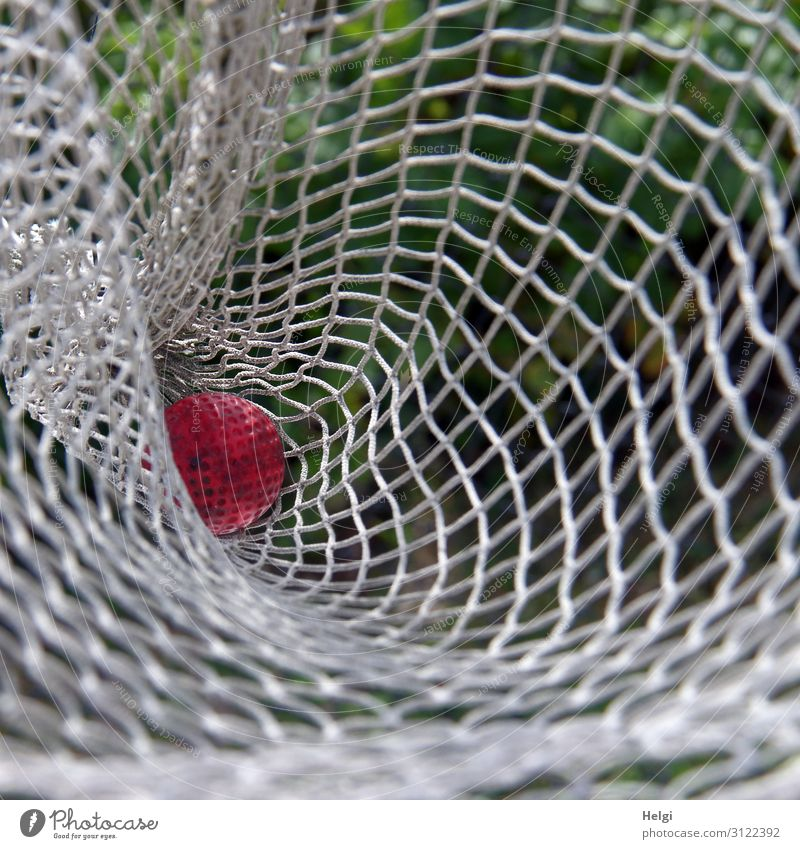 a red miniature golf ball lies in a white net Leisure and hobbies Playing Mini golf Beautiful weather Net Ball Plastic Lie Authentic Uniqueness Small Green Red