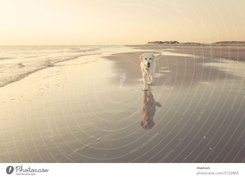 Vacation & Travel Nature Dog Landscape Ocean Joy Beach Healthy Lifestyle Coast Contentment Leisure and hobbies Hiking Happiness Joie de vivre (Vitality) Walking