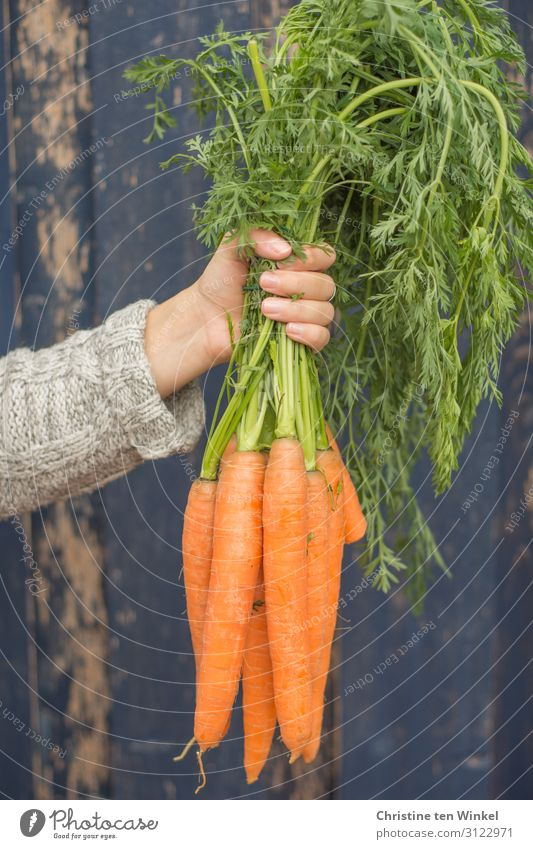stretched out arm of a young woman with a bunch of carrots in her hand Food Vegetable Carrot Nutrition Organic produce Vegetarian diet Feminine Young woman