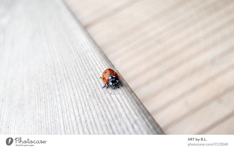 way Animal Beetle 1 Line Stripe Discover Crawl Walking Gray Red Black White Hope Idyll Inspiration Mobility Survive Environment Environmental protection