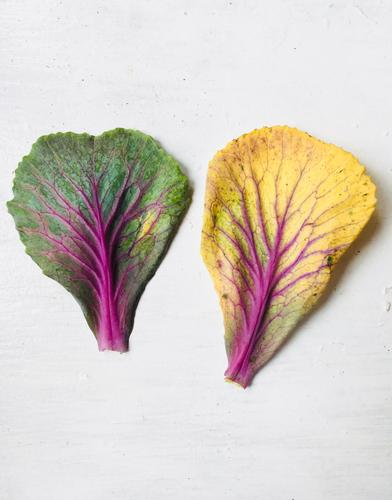 Nature Summer Plant Green White Red Leaf Winter Autumn Yellow Spring Pink Decoration Eternity Uniqueness Transience