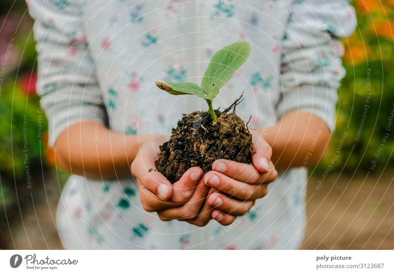 Girl hand holding pumpkin seedling Lifestyle Leisure and hobbies Vacation & Travel Summer vacation Hand Fingers 13 - 18 years Youth (Young adults) 18 - 30 years