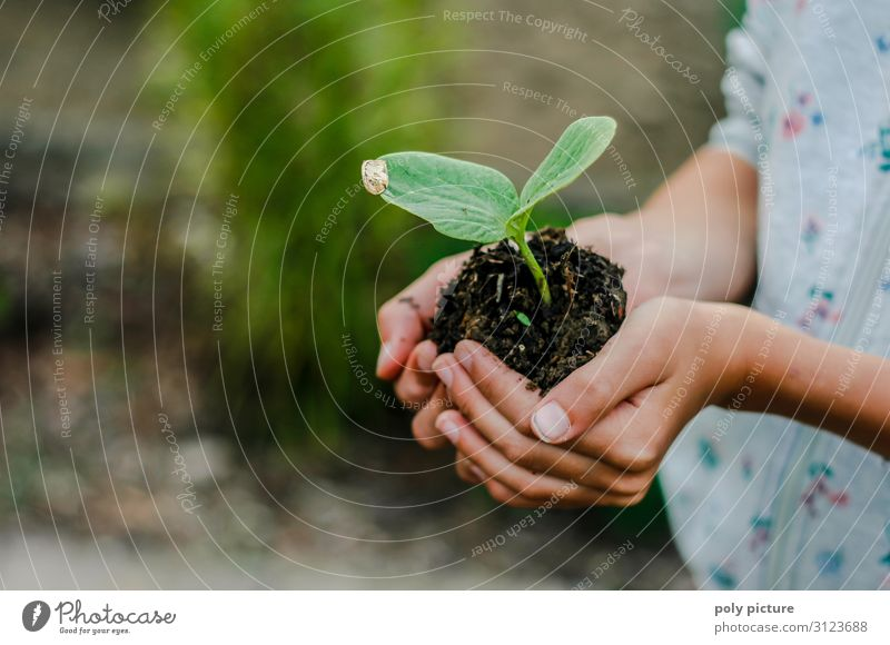 Children's hand holds young plant Lifestyle Leisure and hobbies Vacation & Travel Girl Infancy Youth (Young adults) Hand Fingers 8 - 13 years 13 - 18 years