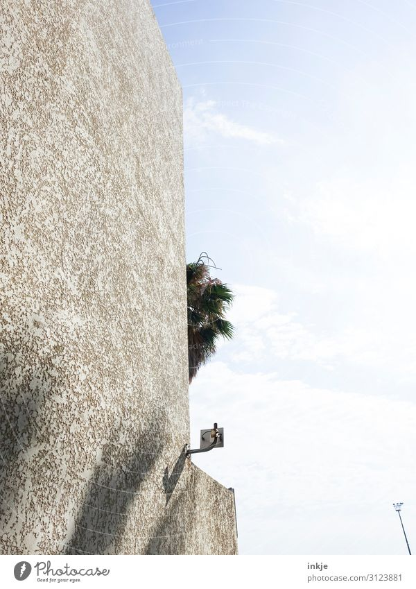 Under palm trees Sky Beautiful weather Exotic Palm tree Palm frond Deserted Wall (barrier) Wall (building) Facade Sharp-edged Town Colour photo Subdued colour