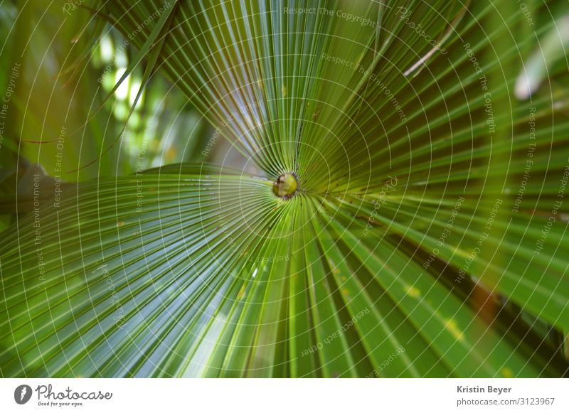 palm Trip Summer Art Nature Plant Tree Leaf Foliage plant Exotic Island Oasis Blossoming Esthetic Glittering Green Joie de vivre (Vitality) Serene Beautiful