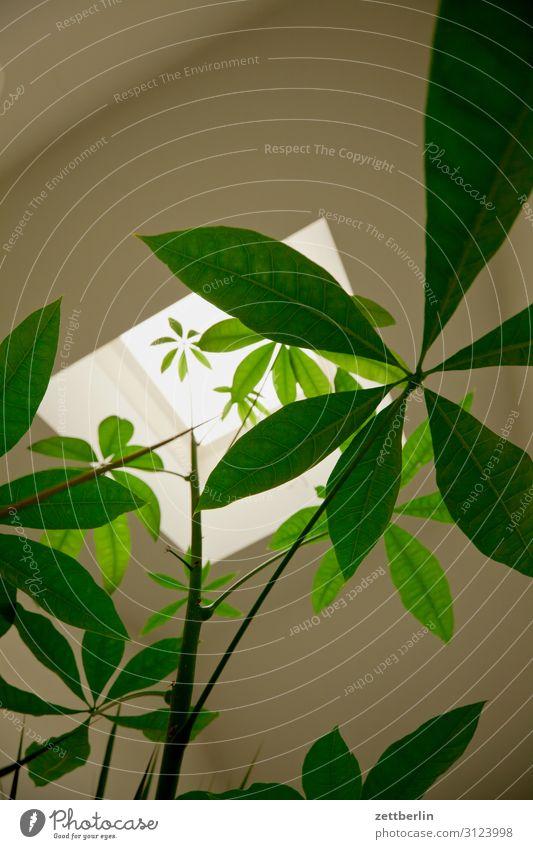 pot plant Leaf Window Worm's-eye view Deserted Plant Copy Space Pot plant Staircase (Hallway) Palm tree Stalk Skylight