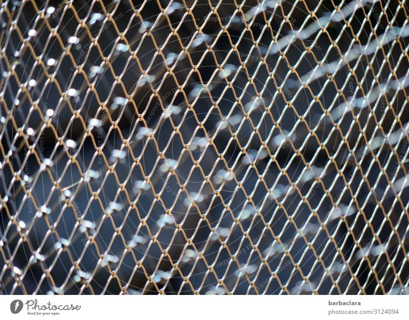 lost boundless freedom Fence Wire netting fence Metal Line Network Dark Sharp-edged Strong Silver Emotions Disappointment Testing & Control Protection Safety