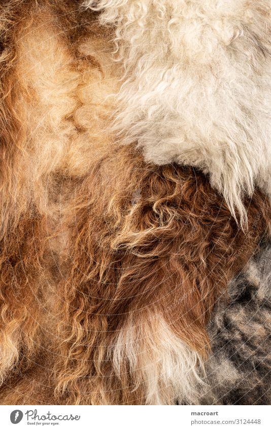 fur Pelt peel tan Sheep Wool Close-up Detail Macro (Extreme close-up) Tanner Natural Ecological Organic farming