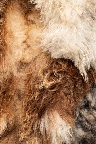 Natural Pelt Sheep Ecological Organic farming Wool Tanner
