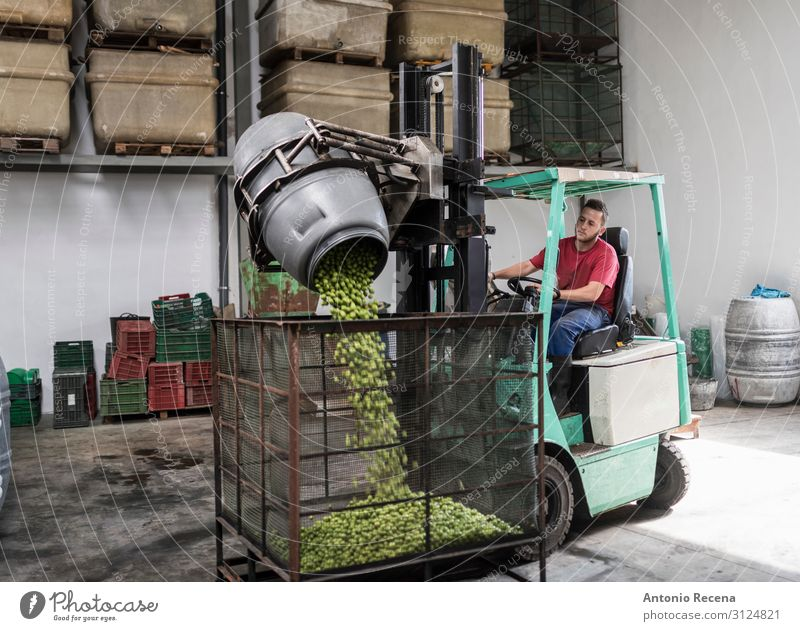 Olives worker at forklift Fruit Work and employment Profession Workplace Factory Industry Business Company Human being Man Adults Transport Vehicle Container