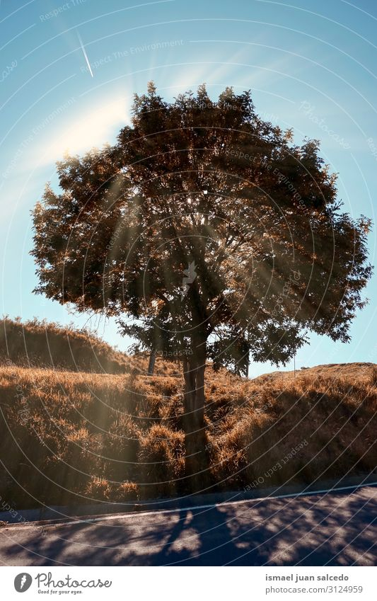 tree and sunlight in the nature in autumn Tree Sun Sunlight trunk Brown Red Leaf Branch Forest Mountain Nature Landscape Exterior shot Vacation & Travel Places