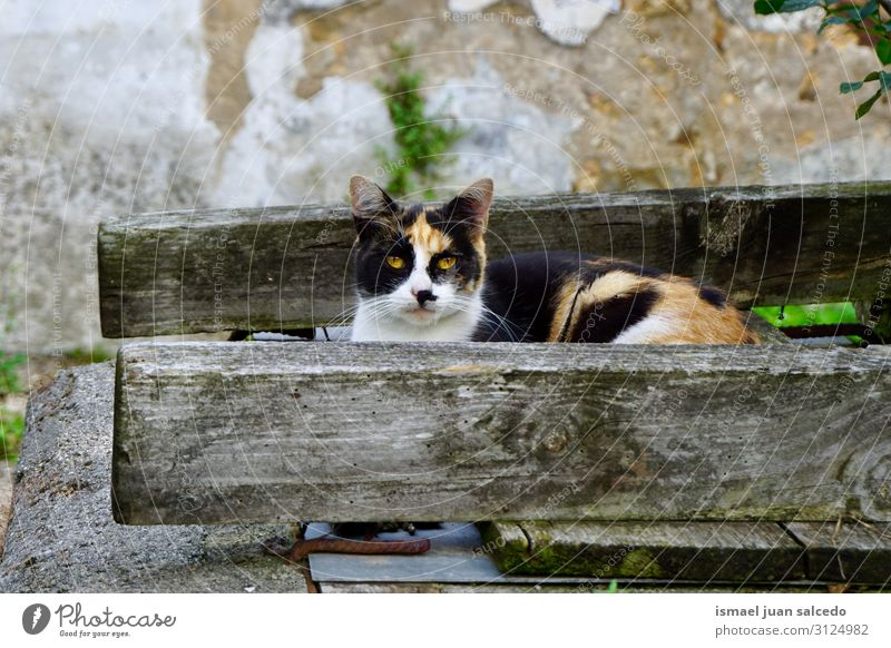 beautiful stray cat looking at the camera Cat Pet Kitten Street Whiskers Portrait photograph Animal Head Eyes Ear Hair Neutral Background Nature Cute
