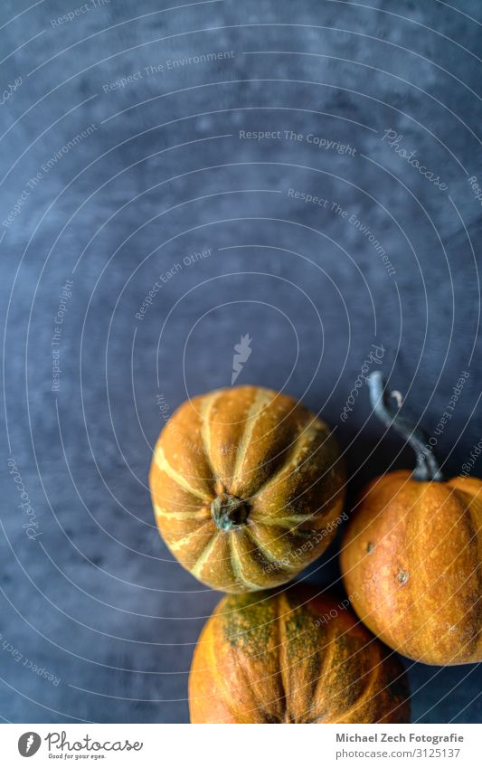Happy Thanksgiving, Selection of various pumpkins on grey stone Vegetable Dinner Design Decoration Table Feasts & Celebrations Hallowe'en Nature Plant Autumn