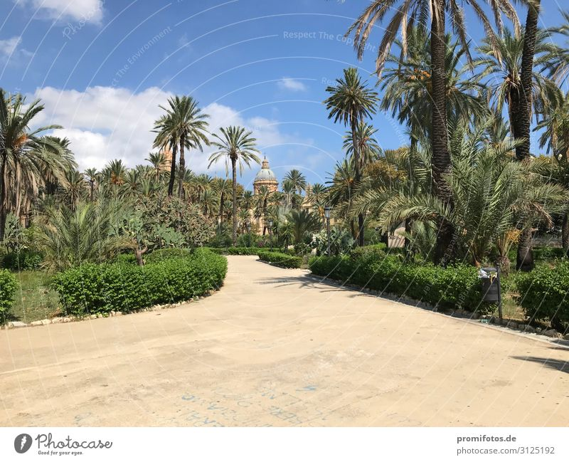 Park in Palermo, Sicily, Italy Vacation & Travel Nature Summer Plant Blue Beautiful Green Sun Environment Tourism Trip Walking Summer vacation City trip