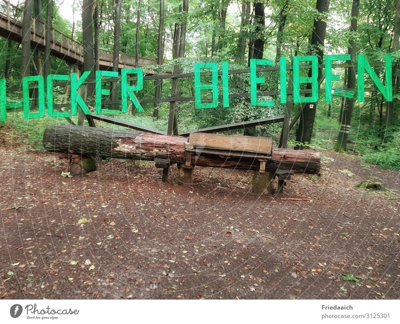 Natural wooden bench Trip Hiking Nature Plant Earth Tree Forest Wood Going Curiosity Interest Movement Discover Relaxation Joie de vivre (Vitality)