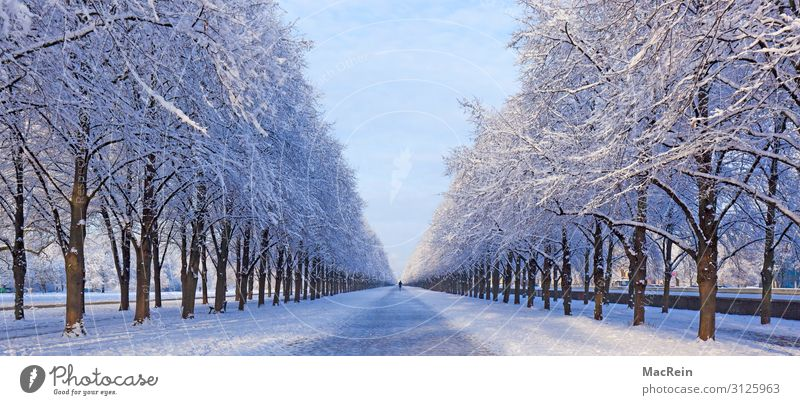 Gerorgengarten, Hanover, Lower Saxony Winter Snow Nature Avenue Row of trees Hannover Snowscape Panorama (Format) Deserted Frost Herrenhäuser Gardens