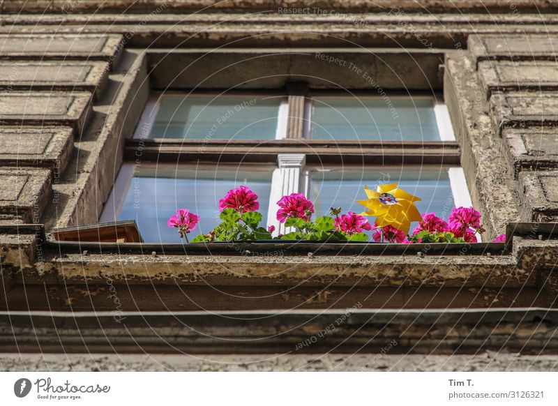 Flowers in front of the window Plant Pot plant Prenzlauer Berg Town Capital city Old town Deserted House (Residential Structure) Manmade structures Building