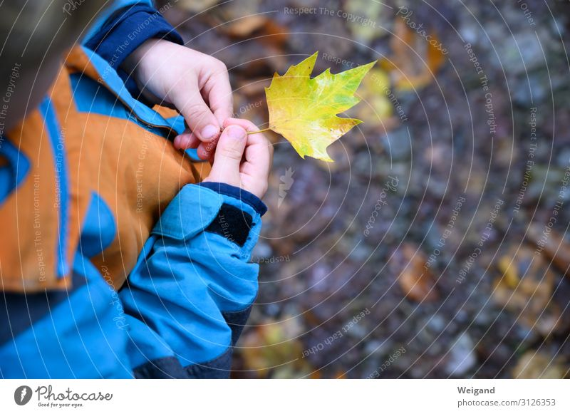 leaf collector Parenting Kindergarten Child Infancy Youth (Young adults) Authentic Curiosity Attentive Autumn Rain Leaf Discover Colour photo Exterior shot