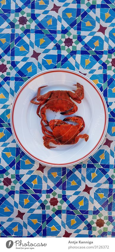crabs Slow food Breton cuisine crustaceans Lifestyle Summer vacation Ocean pleasure trip Restaurant Eating Success Kitchen Gastronomy To talk Team Couple