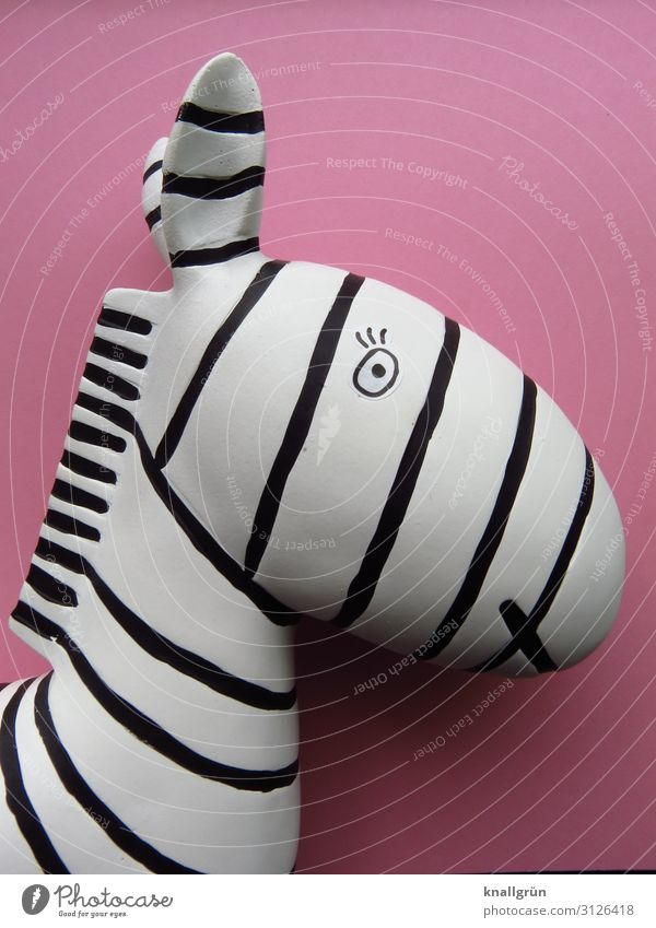 Breton stripes Wild animal Zebra 1 Animal Looking Pink Black White Design Chic Stripe Decoration Colour photo Studio shot Deserted Copy Space right