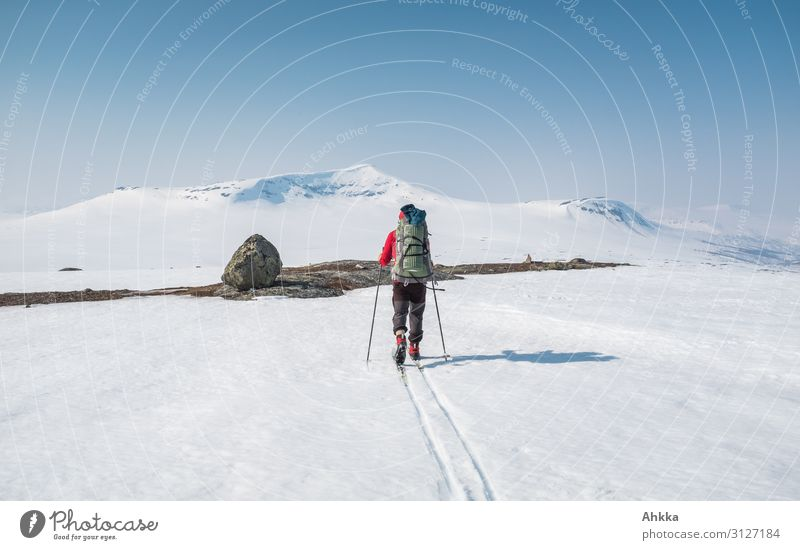 Skier on adventure trip in the north Adventure Far-off places Expedition Winter Snow Mountain Winter sports 1 Human being Nature Ice Frost Norway Ski tracks