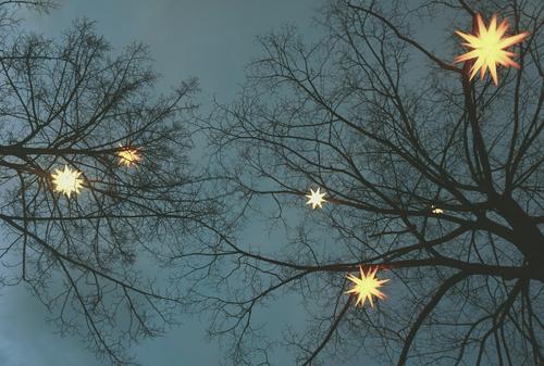 Constellation Tree Night sky Winter Twigs and branches Stars lordnhut stars Decoration Christmas star Wood Plastic Sign Hang Illuminate Dark Bright Above