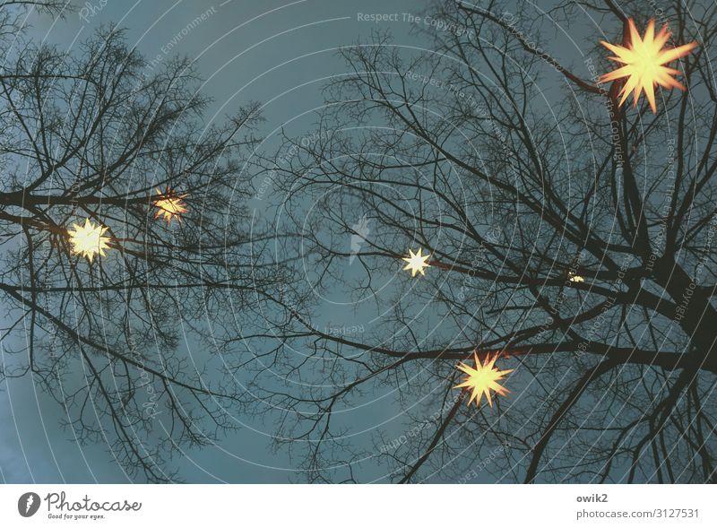 Tree Dark Wood Religion and faith Above Decoration Bright Illuminate Stars Sign Hope Longing Plastic Hang Anticipation Safety (feeling of)