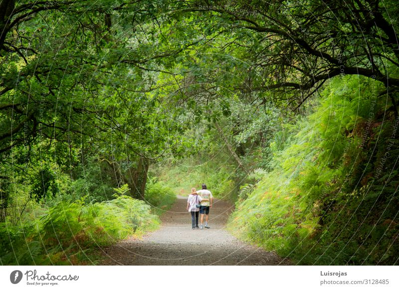 couple walking in the woods Woman Human being Vacation & Travel Nature Man Plant Green Landscape Tree Leaf Forest Mountain Healthy Lifestyle Adults