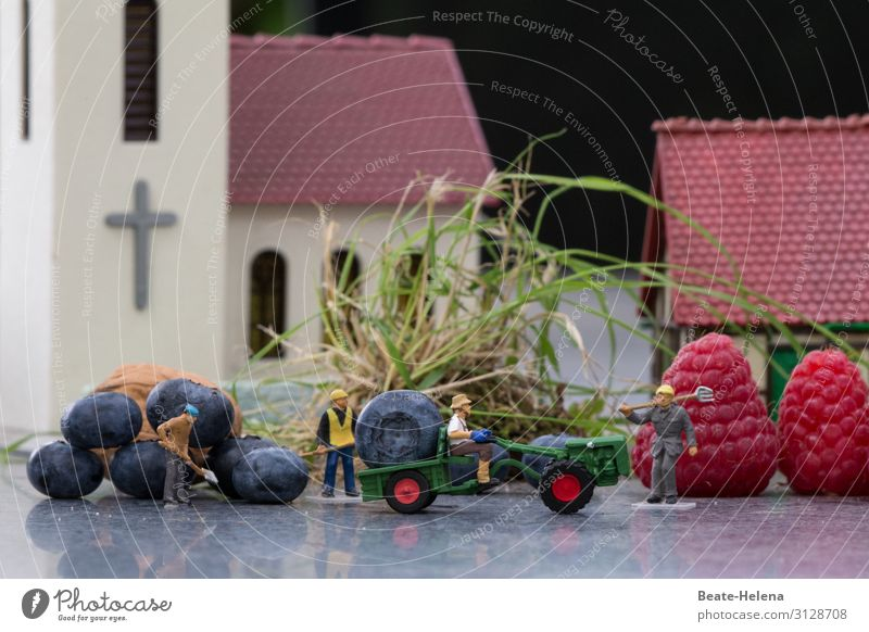 Four harvest helpers transport gigantic berry harvests in the middle of the village onto the loading area of the tractor toy world Village centre