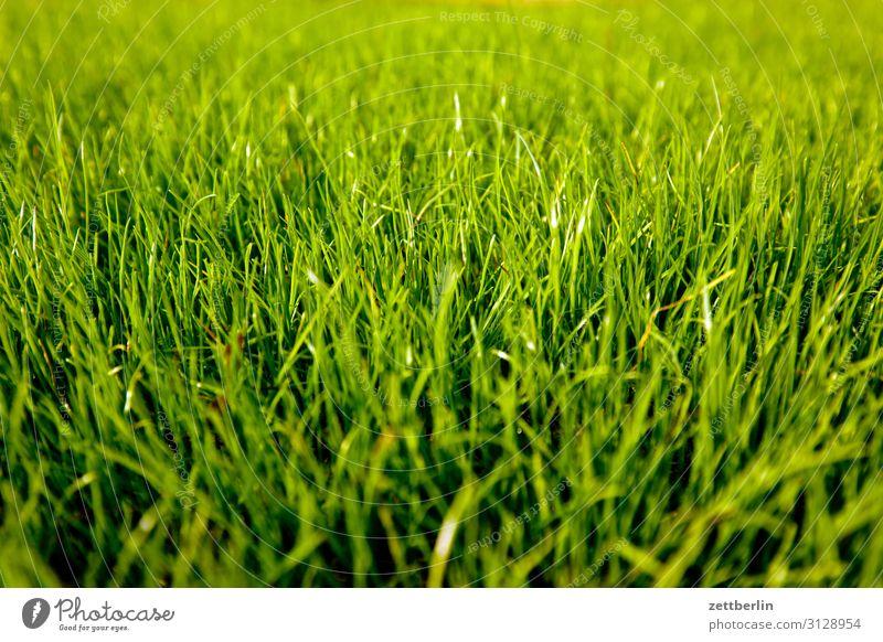 Fresh grass Garden Grass Garden plot Garden allotments Deserted Nature Lawn Grass surface Summer Copy Space Depth of field Meadow Sowing Blade of grass Green