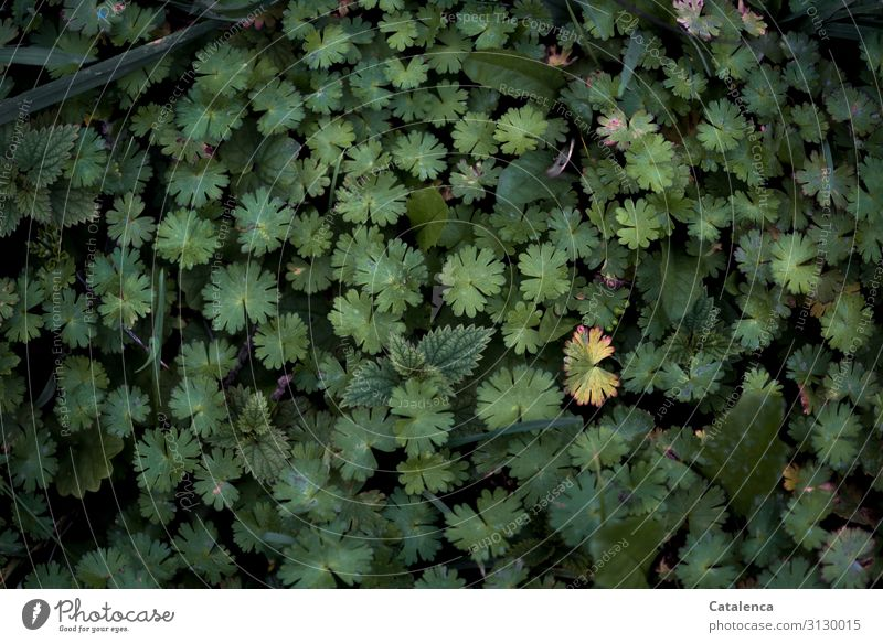 it harvests Nature Plant Drops of water Autumn Leaf Wild plant Weed False Stork's Bill Garden Meadow Old Faded To dry up Growth Authentic Success Together