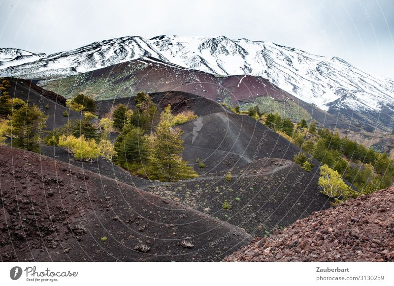 Etna Landscape Elements Bushes Mountain Snowcapped peak Volcano Mount Etna Lava Lava field Hiking Threat Famousness Natural Brown Gray Green White Watchfulness